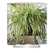 Spider Plant Shower Curtain