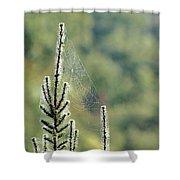 Spider Silk Shower Curtain