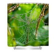 Spider Web Artwork Shower Curtain