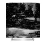 Spider Web Black White Shower Curtain