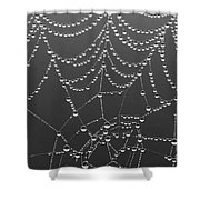 Spider Web Patterns Shower Curtain