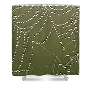 Spider Web With Water Droplets  Shower Curtain