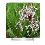 Spider,lily Shower Curtain