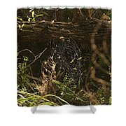 Spiders Web In Sunlight In Peters Canyon Shower Curtain