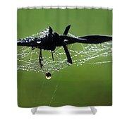 Spiderweb On Fencing Shower Curtain