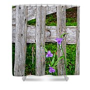 Spiderworts By The Gate Shower Curtain