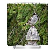 Spiffy Sparrow Shower Curtain