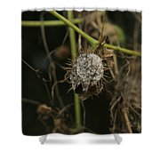 Spikes Shower Curtain