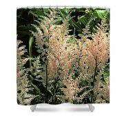Spikes Sunkissed Shower Curtain