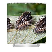 Spiky Beetle Cases Shower Curtain