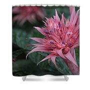 Spiky Pink Shower Curtain
