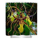 Spindly Orchid Shower Curtain