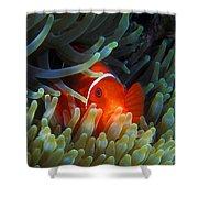 Spinecheek Anemonefish, Great Barrier Reef Shower Curtain