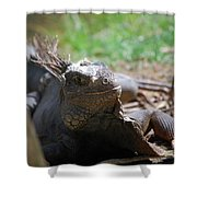 Spines Along The Back Of An Iguana In The Tropics Shower Curtain