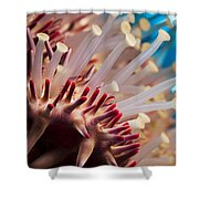 Spines Of A Crown Of Thorns Starfish Shower Curtain