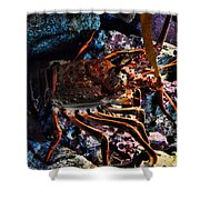 Spiney California Lobster Shower Curtain