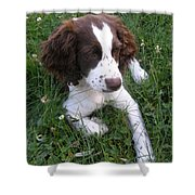 Spinger Spaniel Pup Shower Curtain