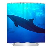 Spinner Dolphin Shower Curtain