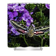 Spinx Moth Shower Curtain