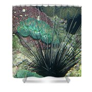 Spiny Shower Curtain
