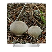 Spiny Puff Balls Shower Curtain
