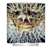 Spiny Puffer Shower Curtain