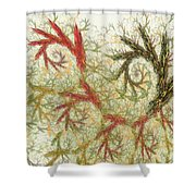 Spiral Embroidery Shower Curtain