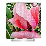 Spiral Pink Tulips Shower Curtain