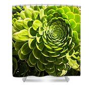 Spiral Succulant Shower Curtain