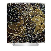 Spirals In Corals Shower Curtain