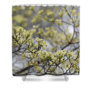 Spirit Of The Dogwood Shower Curtain