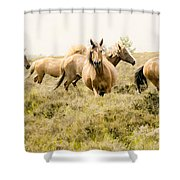 Spirit Of The Horse Shower Curtain by Jason Christopher
