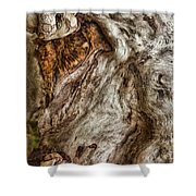 Spirit Of Trees Shower Curtain