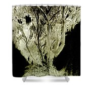 Spirit Tree Shower Curtain by Paul W Faust -  Impressions of Light