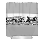 Spirits Of The Horse Shower Curtain