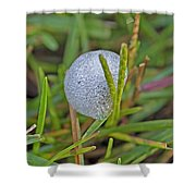 Spittle Bug Case Shower Curtain