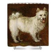 Spitz Dog Shower Curtain by Thomas Gainsborough