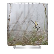 Spl-4 Shower Curtain