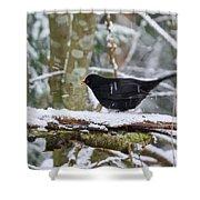 Splash. Eurasian Blackbird Shower Curtain