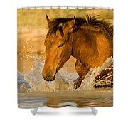 Splashdown Shower Curtain