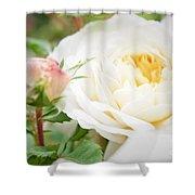 Splended Roses Shower Curtain