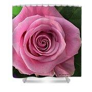 Splendid Rose Shower Curtain