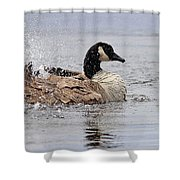 Splish Splash - Canada Goose Shower Curtain