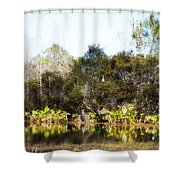 Spoon Bill Swamp Shower Curtain