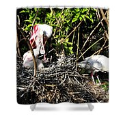 Spoonbill Family Shower Curtain