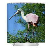 Spoonbill In A Tree Shower Curtain