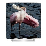 Spoonbill Preening Contortions Shower Curtain