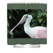 Spoonbill Profile Shower Curtain