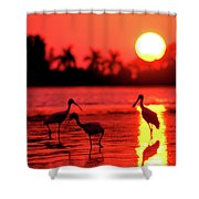 Spoonbills At Sunset Shower Curtain