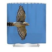 Spot-winged Falconet  In Flight Shower Curtain
